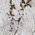 kiraz · çiçeği · vazo · pembe · cam - stok fotoğraf © es75
