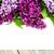 lila · flores · vacío · tarjeta · edad - foto stock © es75
