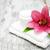 свежие · розовый · Лилия · кремом · цветок · природы - Сток-фото © es75