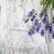 lavender flowers stock photo © es75