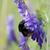 ape · fiore · raccolta · polline · cielo · fiori - foto d'archivio © es75