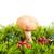 boletus · di · funghi · porcini · bianco · alimentare · natura · mangiare - foto d'archivio © es75