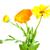 fleurs · isolé · sécher · blanche · feuille · été - photo stock © es75