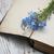 цветы · мне · не · старые · книги · текстуры - Сток-фото © es75