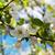 весны · яблоневый · сад · яблоко · деревья - Сток-фото © es75