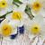 çiçekler · tablo · taze · mavi · ahşap · masa · bo - stok fotoğraf © es75