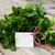 ramo · de · natureza · verde · medicina - foto stock © es75