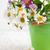 cubo · flores · silvestres · primavera · madera · naturaleza - foto stock © Es75