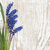 синий · гиацинт · ваза · весенние · цветы · белый · Vintage - Сток-фото © es75