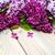 сирень · филиала · свет · весны · дизайна · лист - Сток-фото © es75