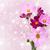 roze · bloemen · veld · Thailand · bloem · landschap - stockfoto © es75