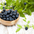fraîches · bleuets · bon · source · nutriments - photo stock © es75