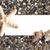 blanco · papier · strandzand · zeester · pint · zomer · wit · zand - stockfoto © es75
