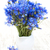 cornflowers stock photo © es75