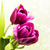 mor · renkli · lâle · çiçekler · beyaz · bahar - stok fotoğraf © Es75