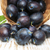 cesta · fruto · outono · estúdio · comer - foto stock © es75