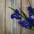 fioritura · Iris · giardino · fiori · casa · primavera - foto d'archivio © es75