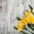 Geel · narcissen · veld · bloemen · voorjaar · natuur - stockfoto © es75