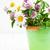 fiori · di · campo · secchio · selvatico · viola · fiori · isolato - foto d'archivio © es75
