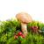 ヤマドリタケ属の食菌 · ポルチーニ · 白 · 食品 · 自然 · 食べ - ストックフォト © es75