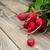 vers · klein · Rood · radijs · Blauw · voedsel - stockfoto © es75