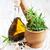 свежие · травы · чеснока · природы · кухне · зеленый - Сток-фото © Es75