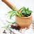 свежие · травы · чеснока · зеленый · мята · Spice - Сток-фото © Es75