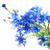 geïsoleerd · bloem · natuur · achtergrond · zomer - stockfoto © es75