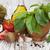 hozzávalók · olasz · főzés · olívaolaj · bazsalikom · paradicsom - stock fotó © es75