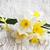 boeket · witte · narcissen · geïsoleerd · bloem · voorjaar - stockfoto © es75