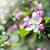primavera · mela · fiore · clean · cielo · blu · fiore - foto d'archivio © es75