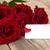schönen · Rosen · Geschenkkarte · Herzen · rosa · frischen - stock foto © es75