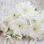 blanco · crisantemo · cubo · flor · naturaleza - foto stock © es75