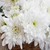 crisantemo · cesta · rojo · blanco · flor - foto stock © es75