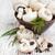 ehető · gombák · fából · készült · tál · friss · erdő - stock fotó © es75