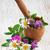flores · silvestres · margaritas · trébol · hierbas · madera · primavera - foto stock © Es75