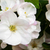 verger · de · pommiers · printemps · fleur · feuille · jardin · été - photo stock © es75