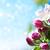 красивой · яблоко · Blossom · весны · время · Blue · Sky - Сток-фото © es75