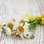 Daisy · flores · ramo · naturaleza · hoja - foto stock © Es75