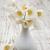 anemones stock photo © es75