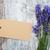 fresco · lavanda · flores · fronteira · pequeno · aromático - foto stock © es75