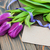 tulips with a card stock photo © es75