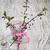 gyümölcsfa · ág · váza · piros · virágok · fából · készült · virág - stock fotó © es75