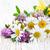 flores · silvestres · margaritas · trébol · flores · silvestres · blanco · rústico - foto stock © Es75