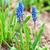 primer · plano · flores · flor · textura · verano · verde - foto stock © es75