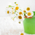 Daisy · flores · cubo · naturaleza · hoja - foto stock © Es75