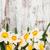 boeket · narcissen · bloemen · geïsoleerd · witte · voorjaar - stockfoto © es75