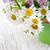 cubo · flores · silvestres · primavera · naturaleza · hoja - foto stock © Es75