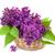весны · довольно · цветочный · цвести · весна - Сток-фото © es75