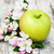 gyümölcsfa · virágok · tavasz · kezdet · égbolt · fa - stock fotó © es75